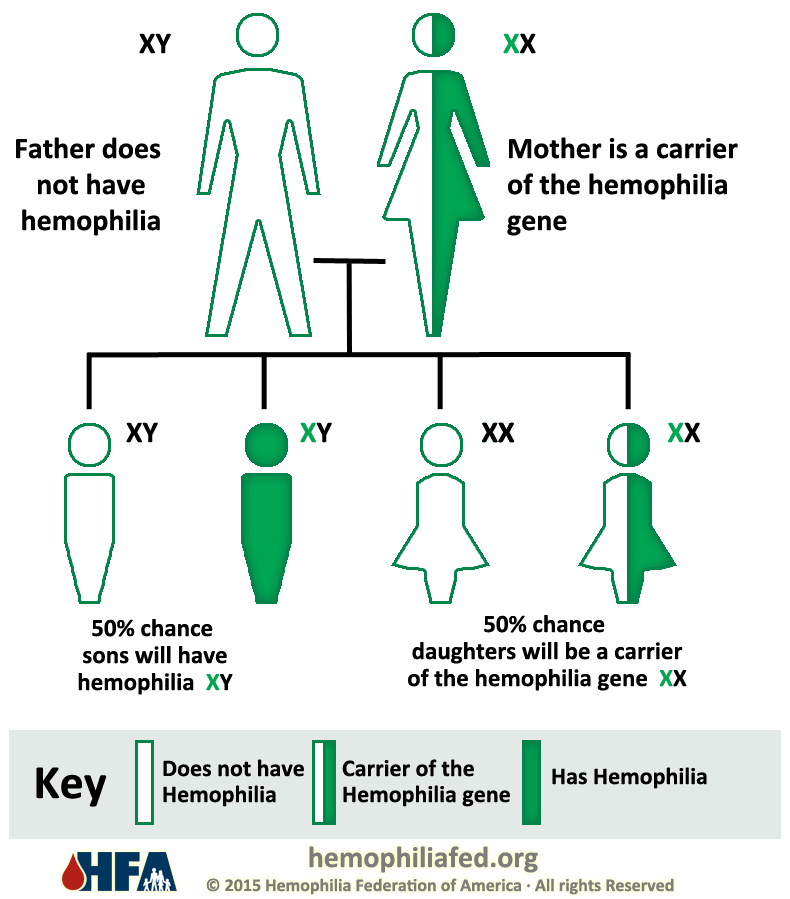 Inheritance Pattern Hemophilia Federation Of America Mesmerizing Genetic Inheritance Patterns