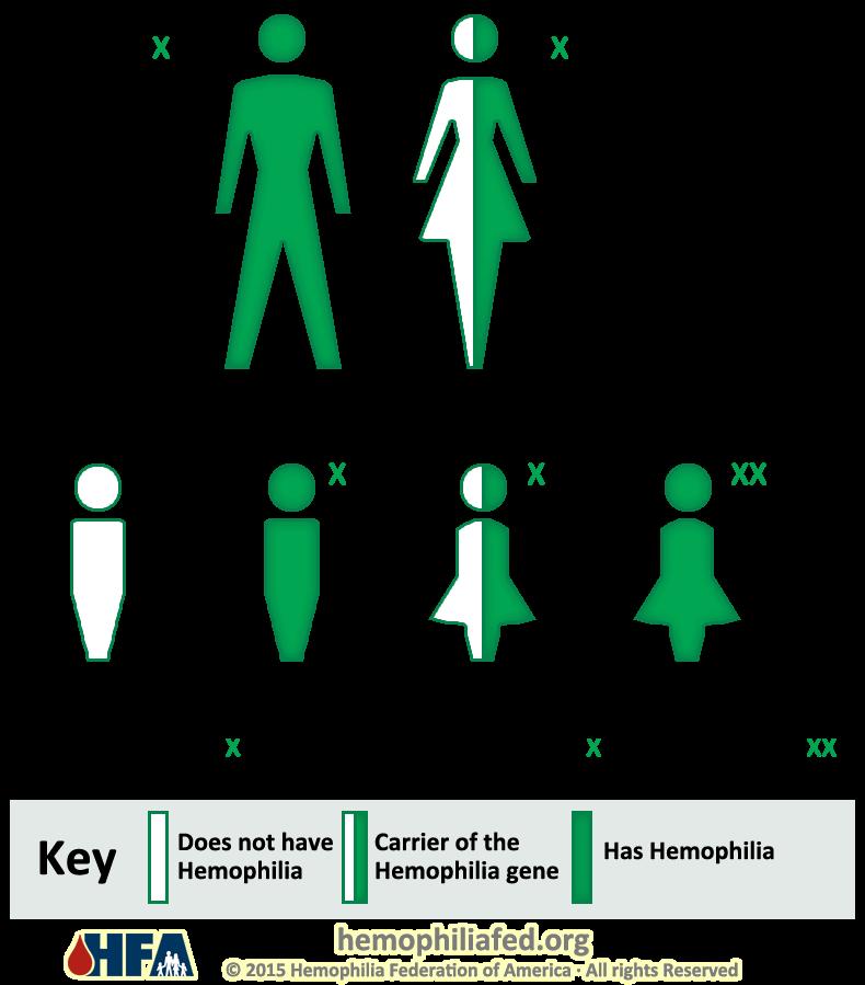 Inheritance Pattern Hemophilia Federation Of America