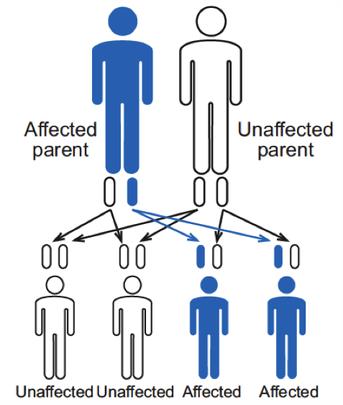 Inheritance Pattern Hemophilia Federation Of America New Genetic Inheritance Patterns